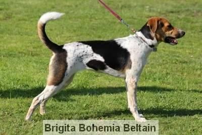 Brigita Bohemia Beltain